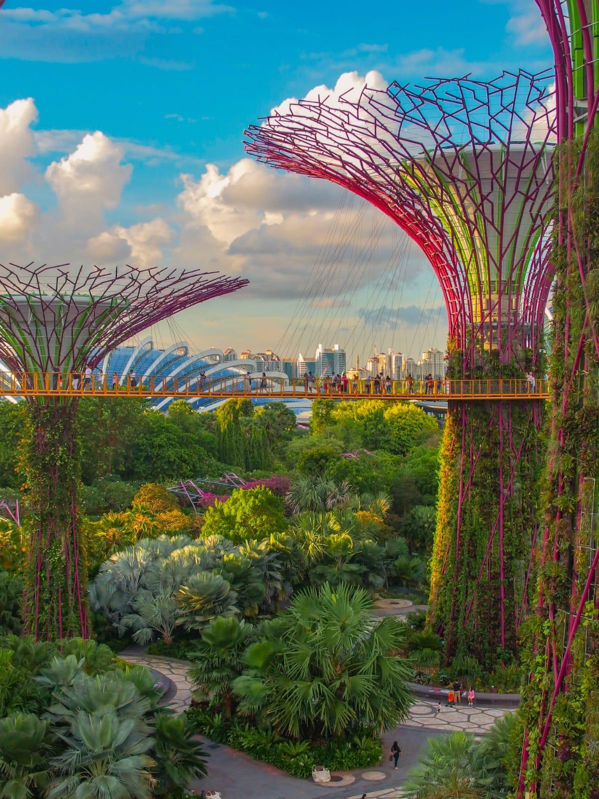 super trees dei gardens by the bay di Singapore